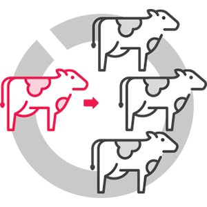 Introducing a new cow icon